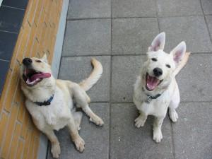 Gratis billede af to glade hunde hvalpe